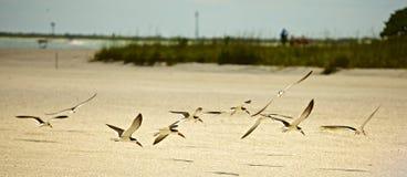 Birds of a Feather photos libres de droits