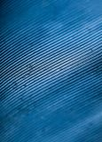 Graphic macro texture of blue birds feather royalty free stock photos