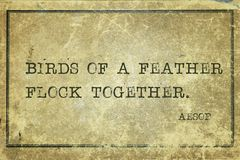 Flock together Aesop Stock Images
