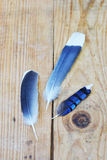 Birds of a feather. Set of mockingbird and blue jay feathers on vintage weathered wooden shipping crate Stock Photo