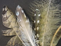 Birds feathers. Different birds feathers on black background Stock Images