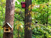 Birds feeder and birdhouse on pine trees royalty free stock image