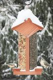 Birds on a Feeder Stock Photos