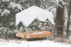 Birds on a Feeder Stock Image
