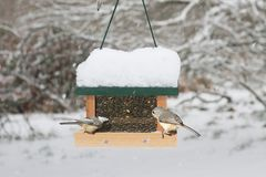 Birds on a Feeder Royalty Free Stock Images