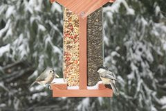 Birds on a Feeder Royalty Free Stock Photo