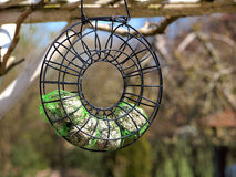 Birds feeder hanged on a tree Royalty Free Stock Photography