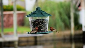 Birds on feeder Royalty Free Stock Images