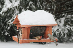 Birds on a Feeder in Snow Royalty Free Stock Photo