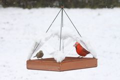 Birds on a Feeder in Snow Stock Photography