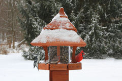 Birds on a Feeder in Snow Royalty Free Stock Photography