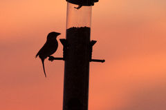 Birds at a feeder at sunset Royalty Free Stock Photo
