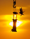 Birds at a feeder at sunset Stock Image