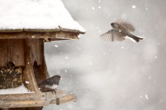 Birds at feeder in Winter Stock Images