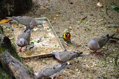 Birds Feeding Royalty Free Stock Photography