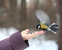 Birds feeding from hand Royalty Free Stock Photography