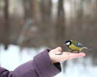 Birds feeding from hand Royalty Free Stock Image