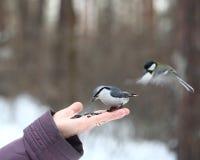 Birds feeding from hand Royalty Free Stock Photography