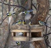 Birds feeding in winter Royalty Free Stock Photos