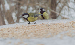 Two birds on ground covered with snow Stock Image
