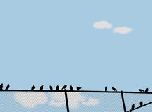 Birds on a fence Stock Image