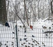 Birds on a fence Stock Photos
