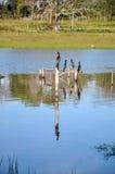 Birds on fence, Pantanal (Brazil) Stock Photos