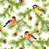 Birds finch, tit, branches of christmas tree. Seamless pattern. Watercolor Royalty Free Stock Photography