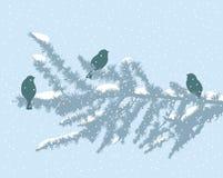 Birds on fir branch Stock Photos