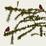 The birds on the fir branches Stock Photos