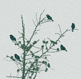 Birds on a fir tree Stock Image
