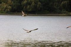 Birds fishing Royalty Free Stock Photography