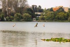 Birds fishing Royalty Free Stock Images