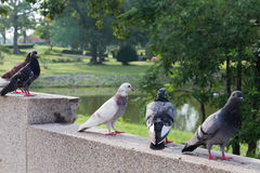 Birds. Five birds perched on the railing of the bridge Royalty Free Stock Photo