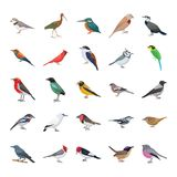 Birds Flat Vector Icons Collection royalty free illustration