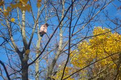 A birdhouse in an autumn forest Stock Photography