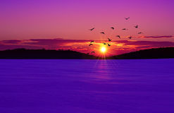 Sunset on the winter field Stock Photography