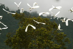 Birds in flight Stock Image