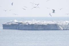 Birds in flight. In winter Royalty Free Stock Photo