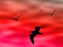 Birds Flight Stock Images