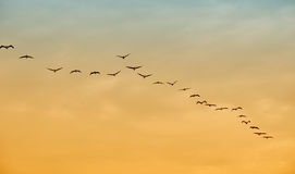 Birds in flight royalty free stock image