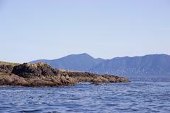 Birds in flight across rocky island off Vancouver Island, Canada Royalty Free Stock Image