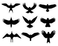 Birds in flight. Black silhouettes of birds in flight, isolated vector illustration