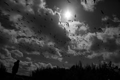 Birds in flight. Black and white image of a flock of birds against the sun with the outline of a figure in the foreground Royalty Free Stock Photo
