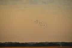 Birds in flight Stock Photo