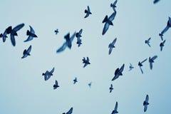 Birds in flight. Over blue sky Stock Photography