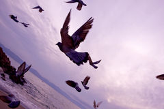 Birds in flight over the ocean Royalty Free Stock Images