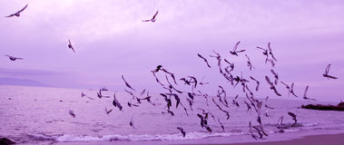 Birds in flight over the ocean Stock Photos
