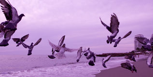 Birds in flight over the ocean Royalty Free Stock Photos