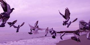 Birds in flight over the ocean Royalty Free Stock Photos